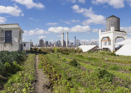 Urban Gardening on a rooftop in New York City