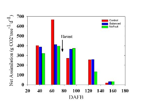 Net assimilation for three cropping level treatments at 41, 66, 91, 127, and 155 DAFB.