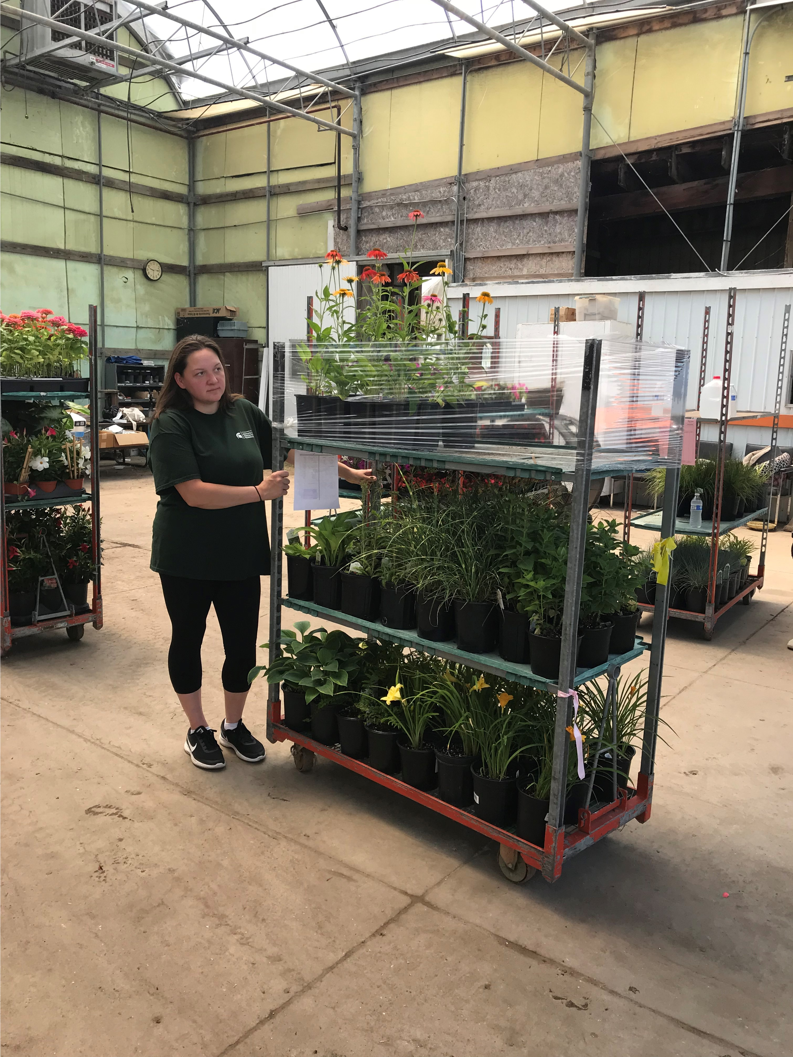Landscape management student Danielle Dunn pushes a cart of plants at Moose & Squirrel Horticultural Resources Greenhouse in Carleton, Michigan.