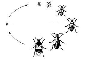 True bug life cycle