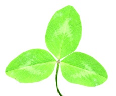 red clover leaf