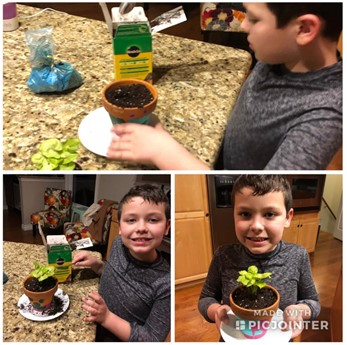 Student potting a houseplant at home