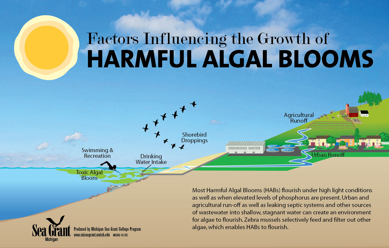 10-742-Harmful-Algal-Bloom-illustration-1579px