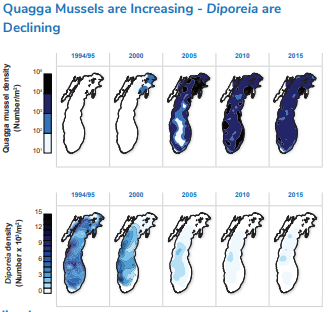 Increasing amounts of quagga mussels are depicted in Lake Michigan by an increasing amount of blue until the entire lake is covered 1994- 2015. The reverse is shown in the declingin of Diporeia as the lake goes from mostly blue to very small sections of very light blue color.