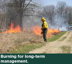 Burning for long-term management.