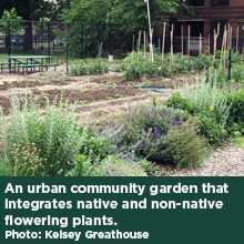 An urban community garden that integrates native and non-native flowering plants. Photo: Kelsey Greathouse