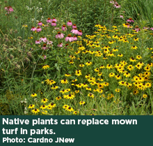Native plants can replace mown turf in parks. Photo: Cardno JNew