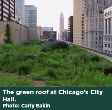 The green roof at Chicago's City Hall. Photo: Carly Eakin