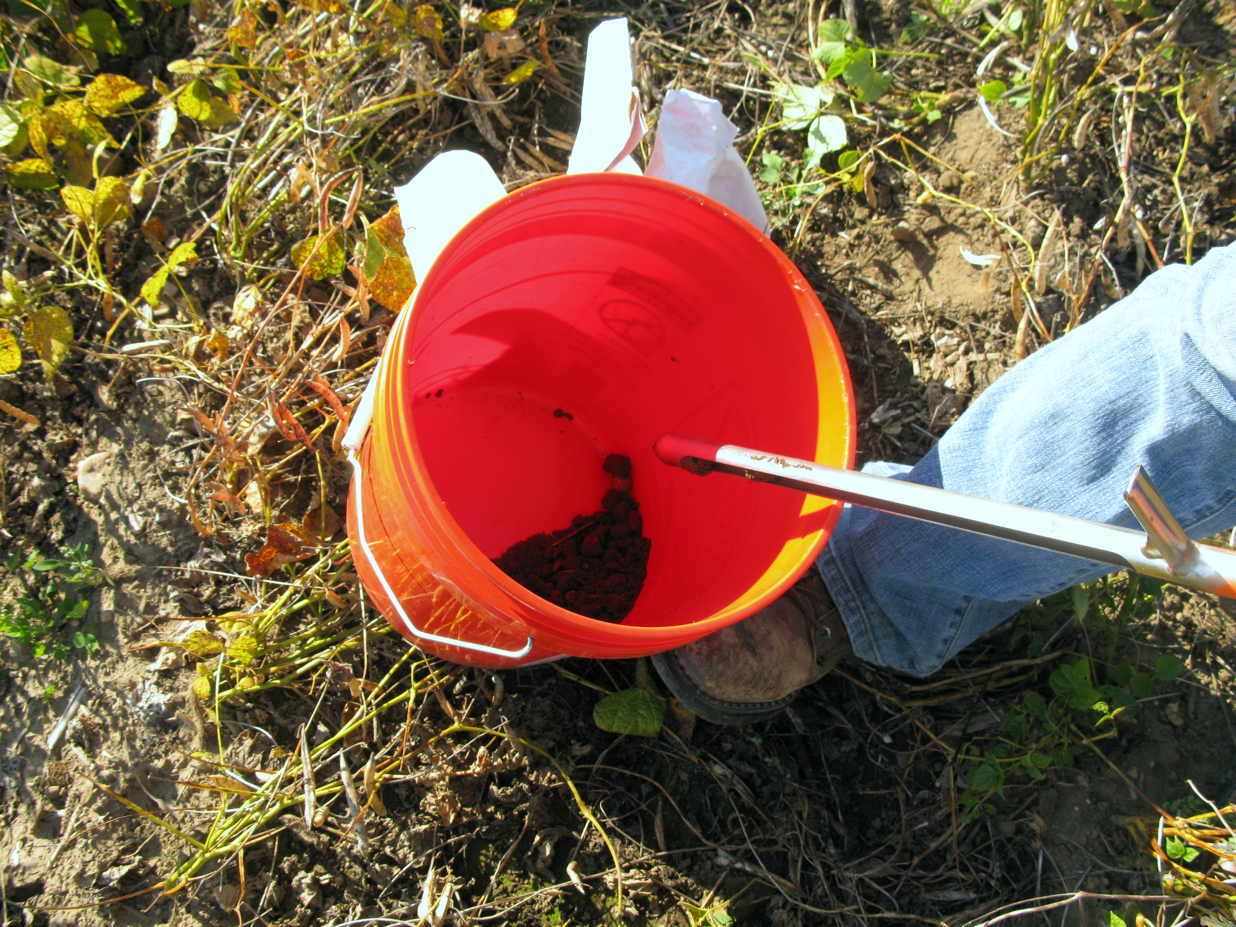 Soil subsamples collected into an orange bucket.