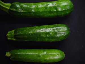 Zucchini fruit infected with Squash Mosaic Virus