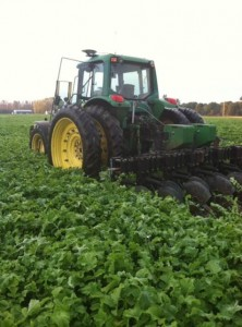 Field of oilseed radish at incorporation (photo by Eric Sal, Walters Gardens)