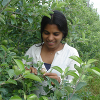'Cholani K. Webbadde inspects leaves of some plants