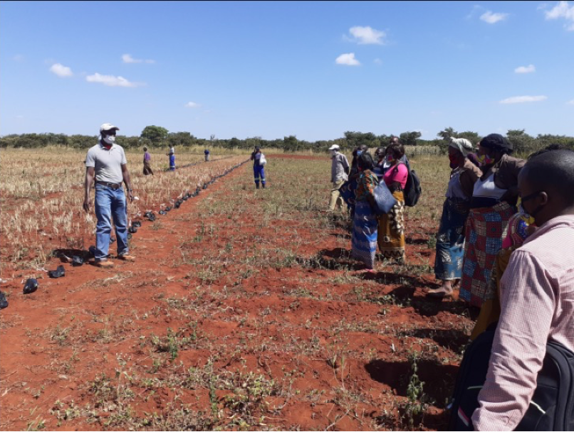 Dr. Kelvin Kamfwa facilitating participatory selection of yellow bean germ plasm with farmers in Zambia (2020)