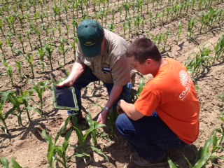 Ag industries interns in the field looking at corn seedlings