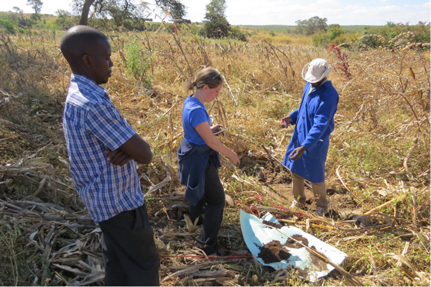 USAID SIIL project: Alison Nord evaluating sustainable soil management in Tanzania