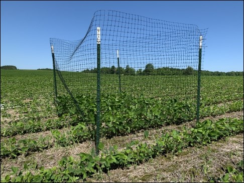 Exclusion cage in a field