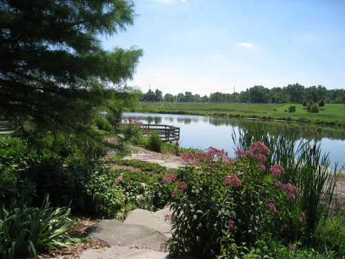 The Constructed Wetland Pond - Tollgate Farm and Education Center