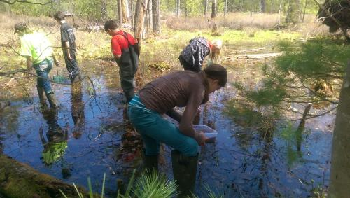 photo of MSUE class study of vernal pools