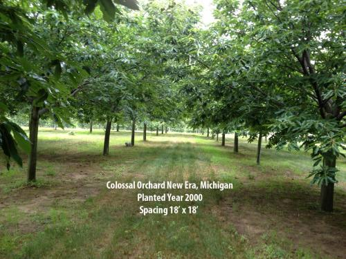 Colossal orchard in New Era