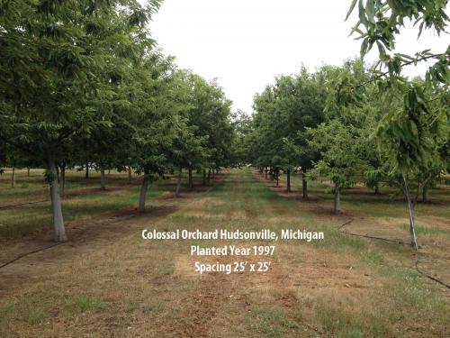 Colossal orchard in Hudsonville