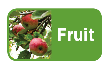 Michigan Fresh -- Fruit