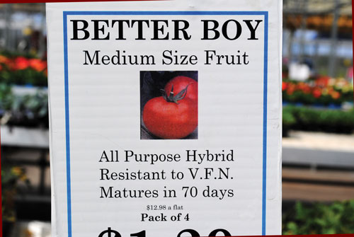 ''Example of tomato transplants sign at retail greenhouse. 'Better Boy' tomato is resistant to Verticillium and Fusarium wilt as well as nematodes.""