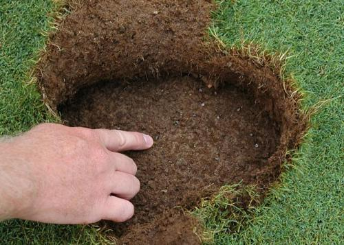 Watch For Grub Damage In The Fall And Next Spring E0016turf