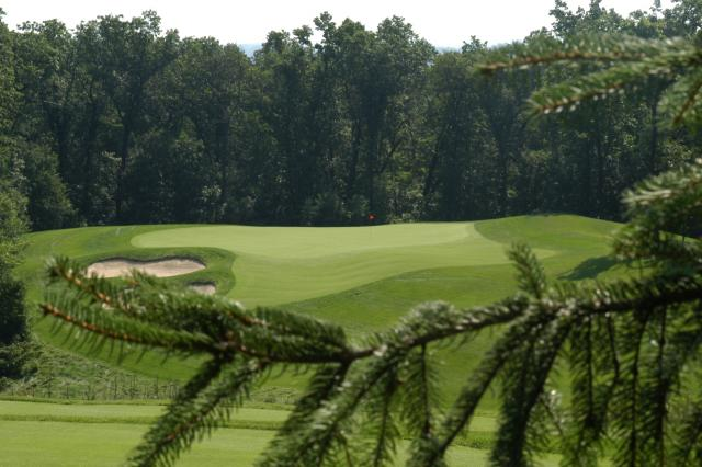 'Golf course with pine tree'