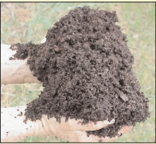 One Horse or a Hundred-What is Composting Anyway? (WO1022)