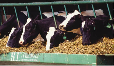 Common Toxins in Equine Feedstuffs (E3061) - MSU Extension