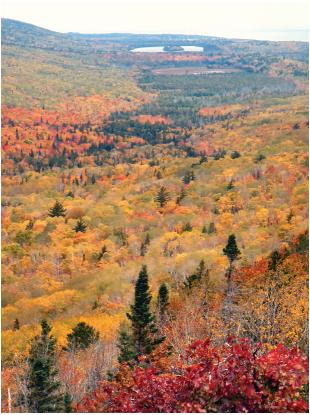 Forest Type Of Michigan Northern Hardwood E3202 2 Msu