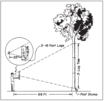 How Much Lumber in that Tree? (E2915) - MSU Extension