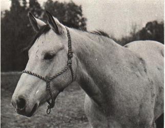 Genetics of Coat Color of Horses (E0981) - MSU Extension
