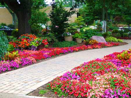 Colorful, vibrant impatiens planted around a walkway