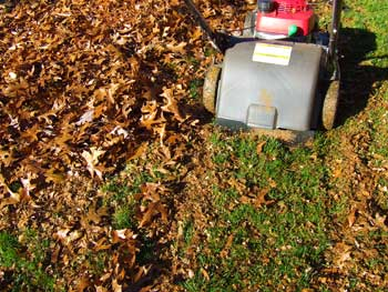 Leaf mulcher in action.