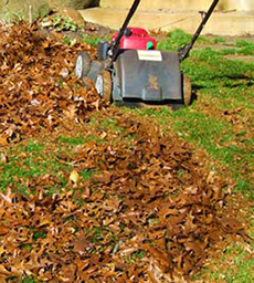 Leaf mulcher near a pile of leaves.