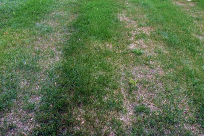 Lawn with dead areas.
