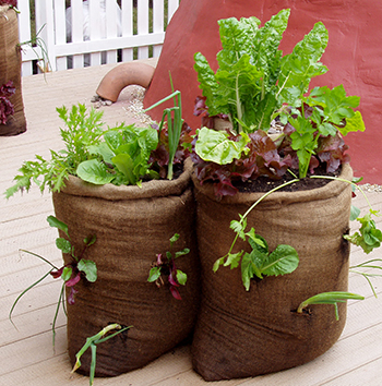 Vegetables growing in a burlap bag.