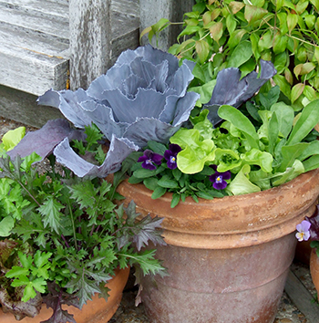 Vegetables growing in a clay pot.