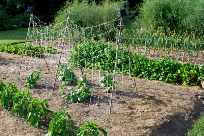 Smart Fertilizer Use A Vegetable Garden Begins With A Soil Management Plan Msu Extension