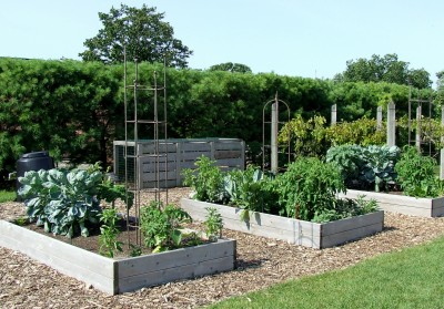 A vegetable garden with raised beds and walking paths.