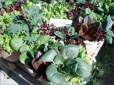 Lettuces can be combined into a fun and tasty container garden that can be cut weekly.