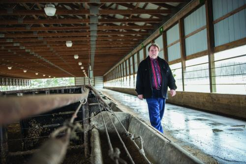 Paul Thompson, MSU professor of philosophy and Kellogg chair of agricultural, food and community ethics, walks through a cattle barn on campus. Thompson has found that most agriculture producers are willing to give up antibiotics as a growth promotant as long as they retain use to treat animal diseases.