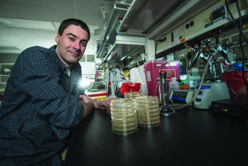 "Christopher Waters, MSU assistant professor of microbiology and molecular genetics, is using his knowledge of chemical signaling to develop novel drugs that prevent bacteria from creating biofilms, an extra-cellular ""shield"" that makes them more tolerant to immune and antibiotic defenses. He believes that refueling the drug pipeline is a critical mission in need of continue research support."