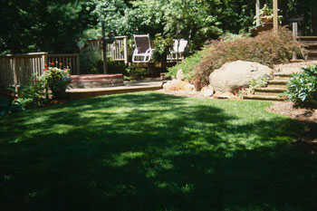 Shady Lawn Alternatives Gardening In Michigan
