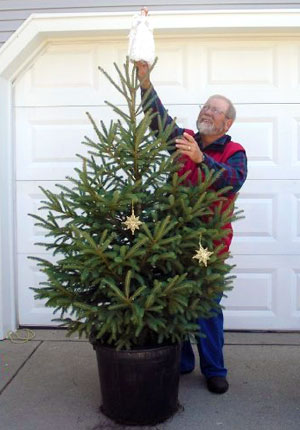 Container Grown Christmas Tree