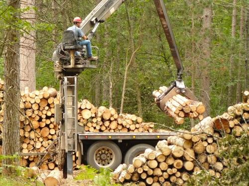 Forest operations, loading sorted products for transport.