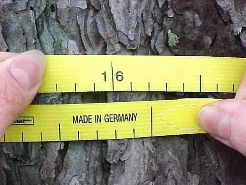 A forester measuring the diameter of a tree.