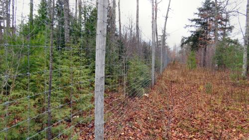 A large exclosure clearly show the impact of long-term deer damage to forest regeneration.