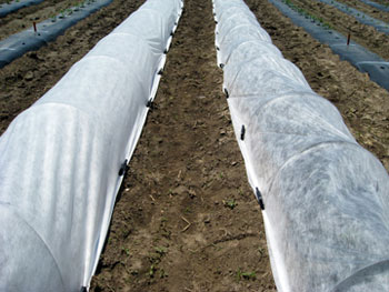 Spunbonded row covers